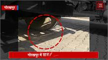 सावधान ! आपकी गाड़ी में हो सकता है सांप, निकलने से पहले कर लें चेक