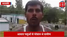 आवारा पशुओं से परेशान ग्रामीणों ने स्कूल में बंद किए 70 मवेशी, मचा हड़कंप