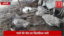 गायों की मौत का सिलसिला जारी, श्रावस्ती में 8 गायों की मौत