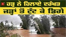Flood में देखें कैसे धराशाही हुए पेड़