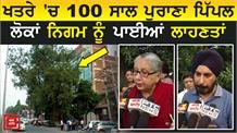 क्या 100 साल पुराने Pipal Tree को बचा पाएंगे लोग ?