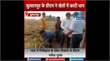 जब सुल्तानपुर के DM को खेत में धान काटते देखकर चौंक गए लोग, जमकर हो रही तारीफ