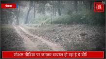 बाघिन के साथ शावकों की मस्ती, पर्यटकों को देख आधे रास्ते से लौटा नन्हा शावक