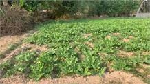 यह कैसा प्रकोप# सूखे से बेहाल किसान# 2 माह से कर रहे बारिश का इंतज़ार