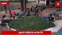सब्जियों के भाव गिरने से किसान परेशान, लागत निकालना तो दूर बेचने पर हो रहा नुकसान