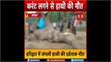 हरिद्वार: करंट लगने से एक हाथी की मौत