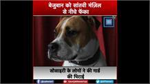 गाज़ियाबाद: बेजुबान कुत्ते का साथ सोसाइटी गार्ड ने की बर्बरता, सांतवी मंज़िल से फेंका नीचे