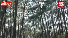 हमीरपुर में बालन की लकड़ी के डिपू बंद होने से आमजन परेशान,उठाई ये मांग