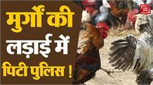 मुर्गों की लड़ाई में कूद पड़े पुलिस और दर्शक, खूब चले पत्थर