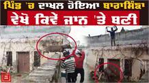 जंगली बारासिंगा ने पूरे गाँव में मचाया हड़कंप , देखो Video