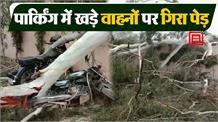 फॉरेस्ट विभाग की बड़ी लापरवाही, बिना जरूरी सुरक्षा उपकरणों के काटा जा रहा था पेड़, गिरा