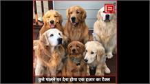 Agra: अगर आप भी हैं डॉग लवर्स, तो पालने से पहले कराना होगा रजिस्ट्रेशन