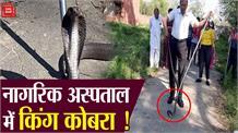 डॉक्टरों के रिहायशी कॉलोनी में घुसा खतरनाक किंग कोबरा, दहशत का माहौल