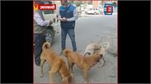Lockdown में कुत्तों और मवेशियों पर ध्यान दे रहा ये सरकारी कर्मी