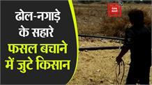 मिर्जापुर पहुंचा टिड्डियों का झुंड, ढोल-नगाड़े और थाली बजाकर फसल बचाने में जुटे ग्रामीण