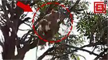 मेरठ में बड़ी लापरवाही: टेक्निशन के हाथ से सैंपल छीनकर भागा बंदर, Video Viral