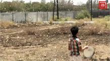 पाकिस्तान से आई टिड्डी गैंग ने मचाया कहर, कई राज्यों में फसलें बर्बाद, किसान परेशान