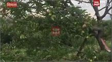 हिमाचल की आर्थिकी पर मंडराए संकट के बादल,बागवानों को सता रही सेबों की चिंता