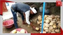 एक रूपये किलो में भी नही बिक रहा कद्दू, किसानों ने सरकार पर निकाली भड़ास