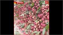 Muzaffarpur:बहुत बुरी स्थिति में फंसे आम-लीची के किसान
