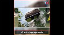 गर्भवती हथिनी को खिलाया पटाखों से भरा अनानास, मुंह में फटा, फिर नदी में तड़प-तड़प कर हुई मौत