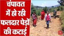 उत्तराखंड़ के चंपावत में की जा रही फलदार पेड़ों की कटाई, इलाके के दबंग लोगों पर लगा आरोप