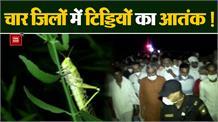 हरियाणा के इन 4 जिलों में आकर बैठ गया है टिड्डी दल, कृषि मंत्री रात 12 बजे जायजा लेने पहुंचे