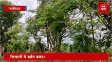 ग्वालियर में बढ़ता जा रहा टिड्डियों का हमला, किसानों की फसलों को भारी नुकसान