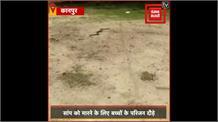 स्कूल के पार्क में खेल रहे बच्चों के सामने जब अचानक आ गया King Cobra,जानिए फिर क्या हुआ