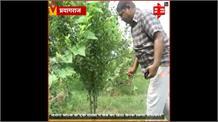 'एक फूल दो माली' फिल्म देखकर सेब की खेती करने के लिए हुआ प्रेरित, किसान ने अपने खेत में तैयार किया सेब का बाग