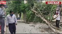 शिमला में बीच बाज़ार बारिश से गिरा पेड़,बड़ा हादसा टला