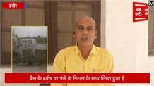 टाइगर जिंदा है के बाद बैल चिन्ह के साथ कांग्रेस चुनाव मैदान में, बीजेपी ने की घोर निंदा