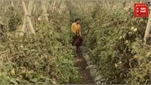 बिना मोटर और बिजली के खेतों में पानी दे रहे किसान, देखिए किसानों का कारनामा