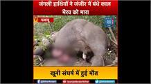 जंगली हाथियों ने जंजीर में बंधे काल भैरव को मारा, खूनी संघर्ष में हुई मौत