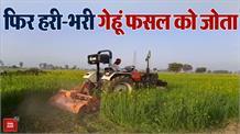 सिर्फ आधा एकड़ रख सारी गेहूं की फसल को ट्रैक्टर से जोता, किसान बोले: तेल 100 रु. लीटर तो  दूध भी 100 रु. देंगे
