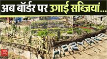 Farmers ने बॉर्डर पर उगाई सब्जियां, गर्मी से बचाव के लिए बांस से बनाएं Hut