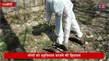 बारामुला के तंगमर्ग में बर्ड फ्लू की दहशत... दर्जनों कौवे और चील मिले मृत