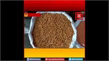 बिहार में पहली बार शुरू हुई दालों की सरकारी खरीद, 5100 रुपये प्रति क्विंटल दाम तय
