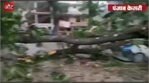 #AUT में #तूफान से #तबाही पेड़ ने दर्जन भर गाडियां दबाईं