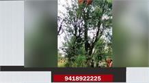 जोगिंदरनगर में गिरा पैराग्लाइडर