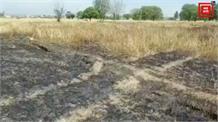 शॉर्ट सर्किट से खेतों में भड़की आग, 61 कनाल गेहूं की फसल हुई राख, प्रशासन से मुआवजे की मांग