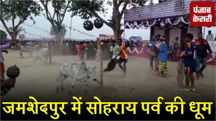 जमशेदपुर में सोहराय पर्व की धूम