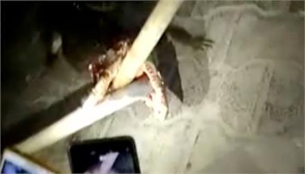 ग्रामीणों ने मगरमच्छ को लाठी डंडों से पीटा, मौत के बाद पेड़ पर लटकाया