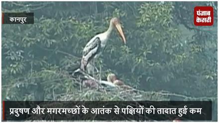 मगरमच्छों के आतंक से प्रवासी पक्षियों की तादात हुई कम, प्राणि उद्यान ने जताई चिंता