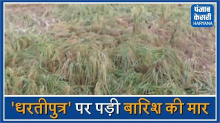 बारिश ने फिर किसानों को रूलाया, अब मुआवजे की आस