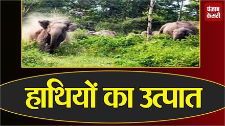 बिगड़ैल हाथियों ने खेतों में घुस कर मचाया उत्पात