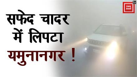 कोहरे की सफेद चादर में लिपटा पूरा शहर, Zero विजिबिलिटी, वाहनों की थमी रफ्तार
