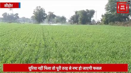 बारिश के बाद किसानों को सताने लगी फसल खराब होने की चिंता, गेहूं में जड़ माहू रोग से मुश्किल में अन्नदाता