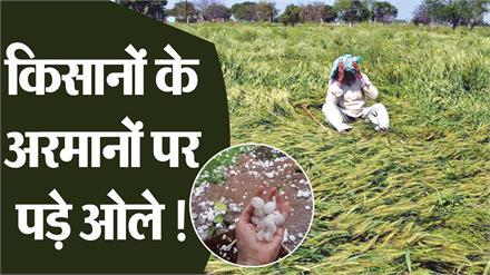 आसमान से बरसी 'सफेद' आफत, खेतों में बिछ गई किसानों की हरी-भरी फसलें