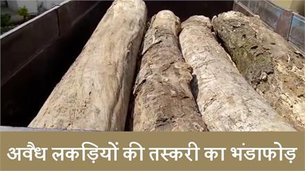 Forest council की बड़ी कार्रवाई, Illegal wood के साथ Tractor driver काबू